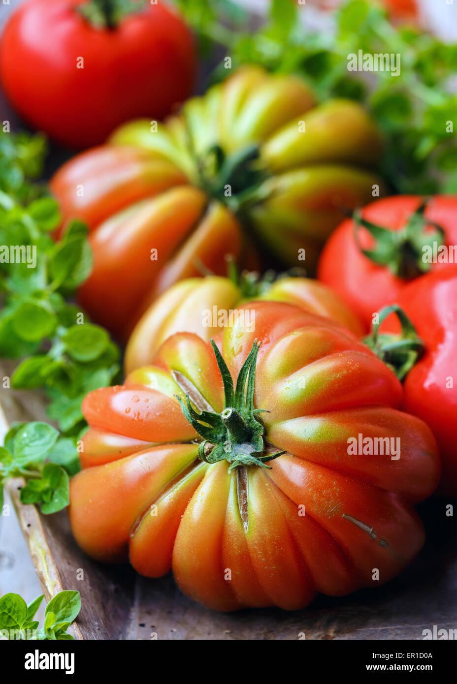 """Tomaten Sorte """"Cuore di Bue"""" Stockbild"""