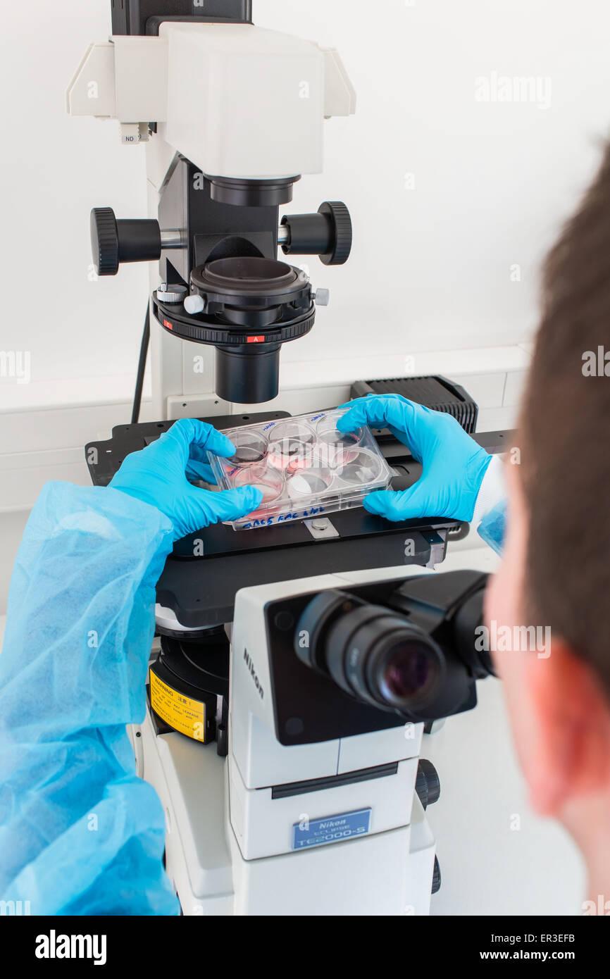 Kulturen der Zellen in flüssigem Medium, Biologie und Forschungszentrum. Stockbild