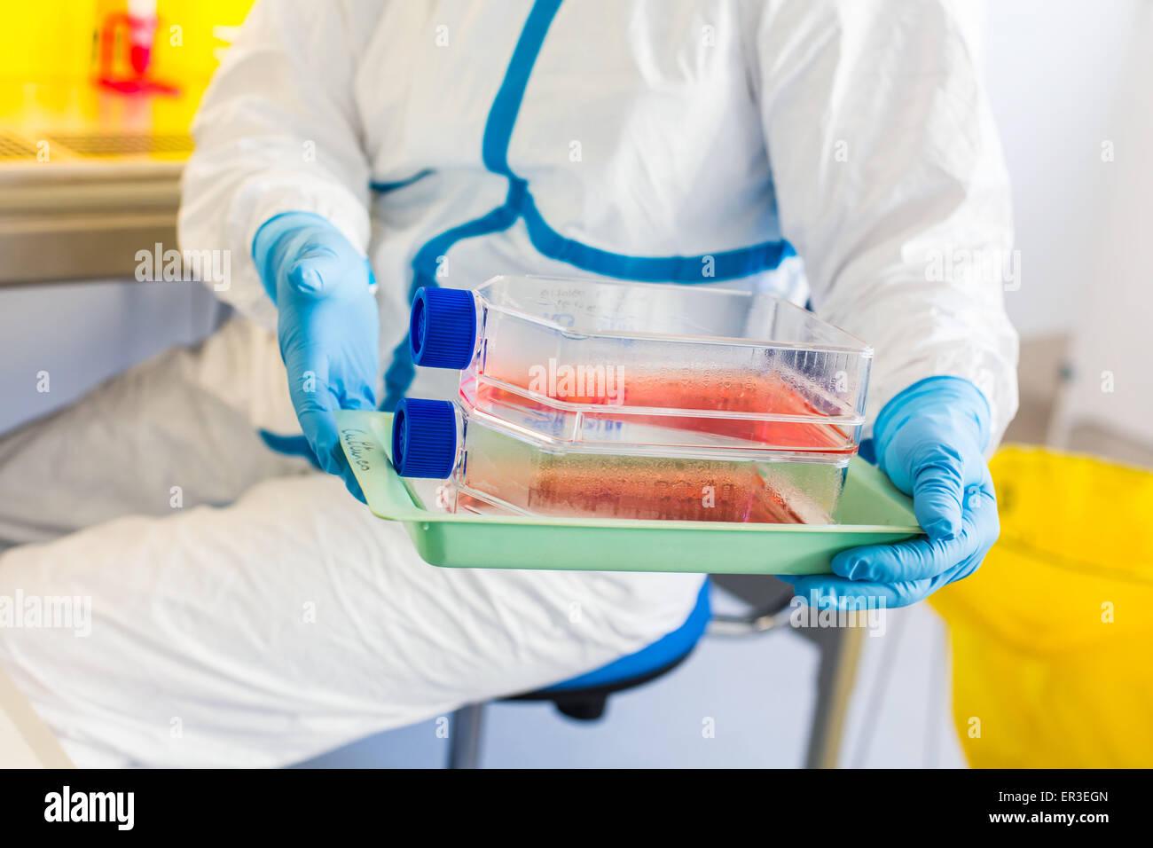 Zellen Kultur Prüfung, Manipulationen im P3-Labor Biologie und Forschungszentrum in University Hospital Health, Stockbild