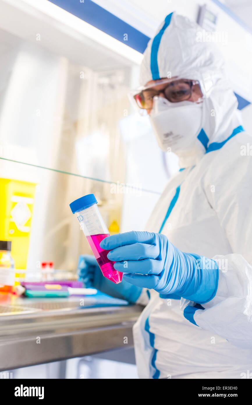 Zellen Kultur Prüfung, Manipulationen im P3-Labor Biologie und Forschungszentrum in Universität Krankenhaus Stockbild