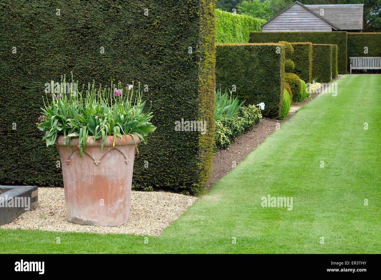 clipped hedges stockfotos clipped hedges bilder alamy. Black Bedroom Furniture Sets. Home Design Ideas