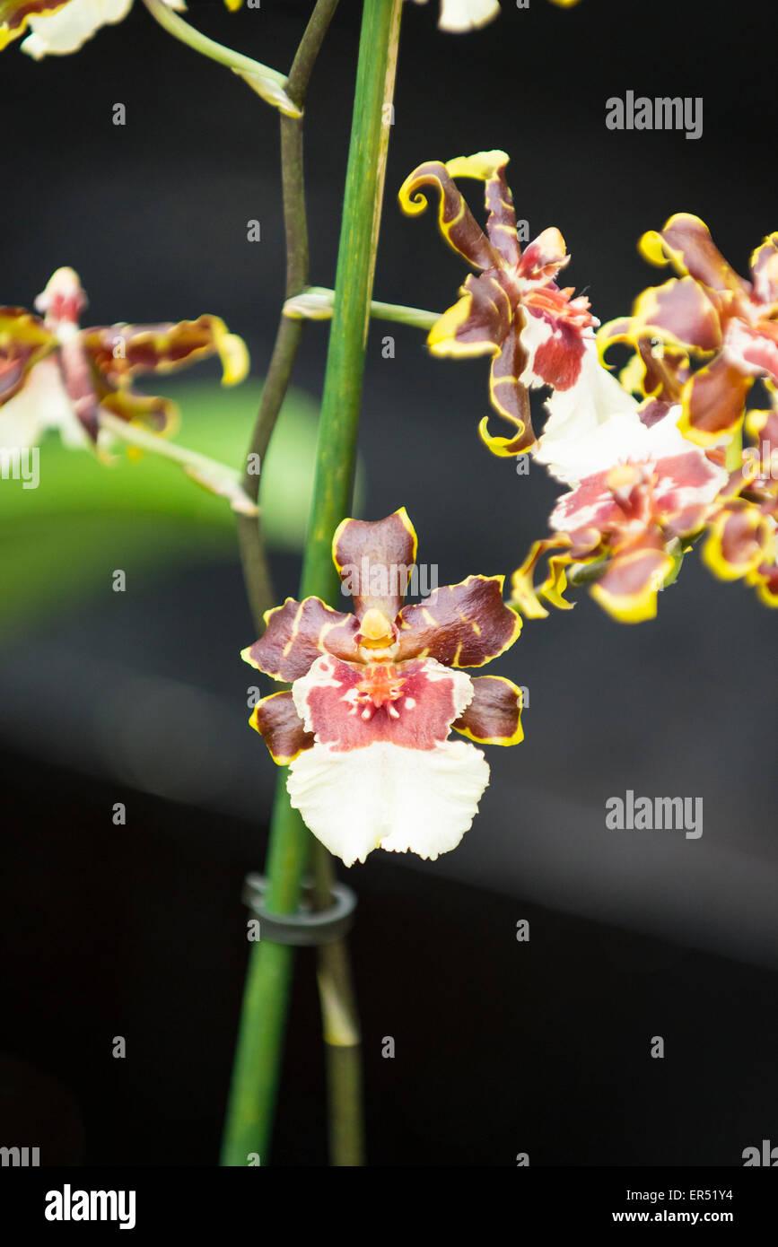 Gemütlich Anatomie Der Blühenden Pflanze Bilder - Menschliche ...