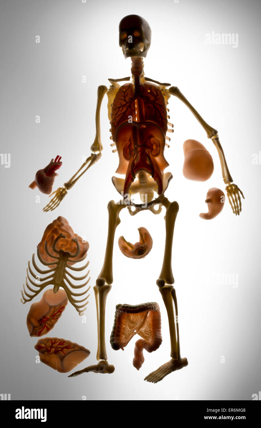 Anatomy Stockfotos & Anatomy Bilder - Alamy