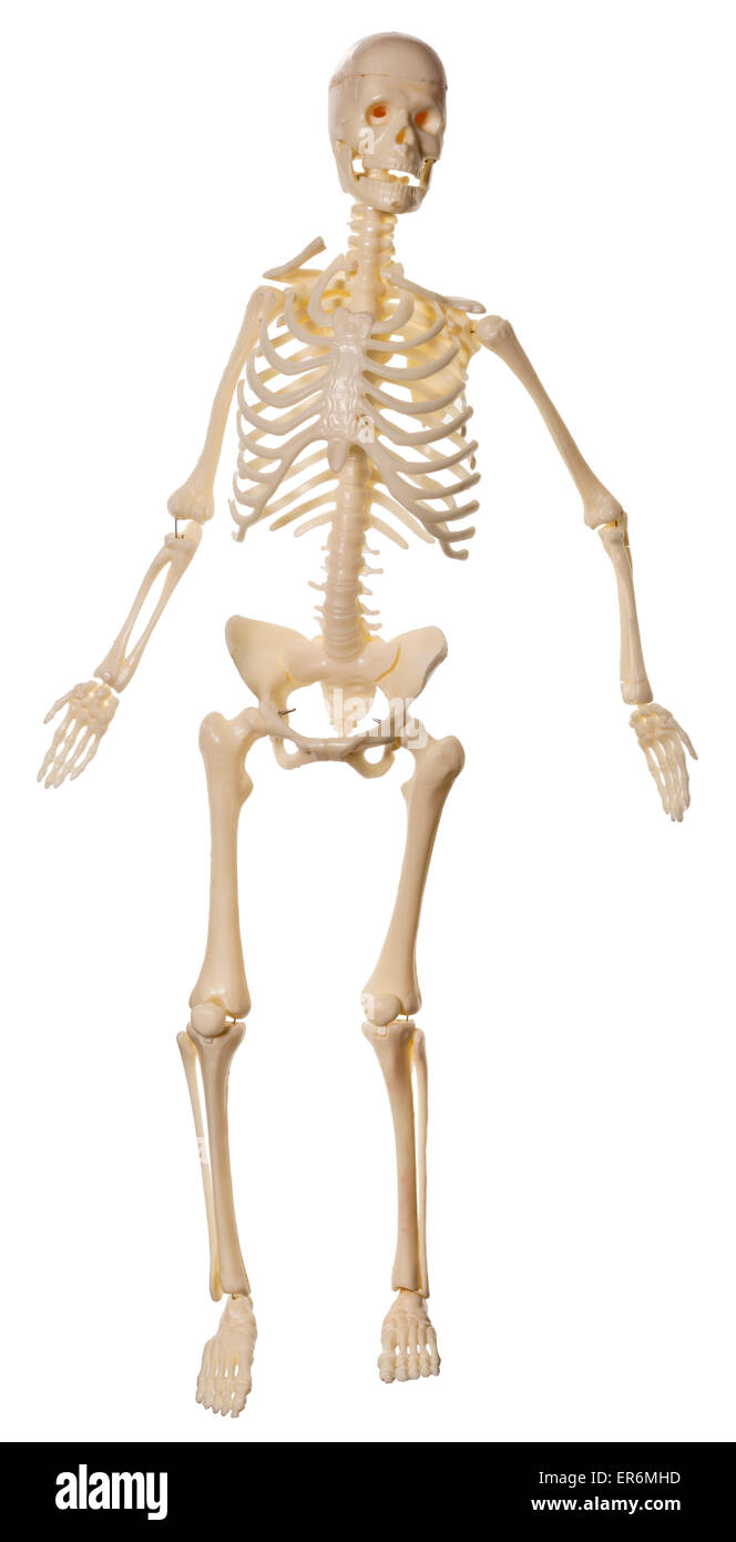Skeleton Stockfotos & Skeleton Bilder - Alamy