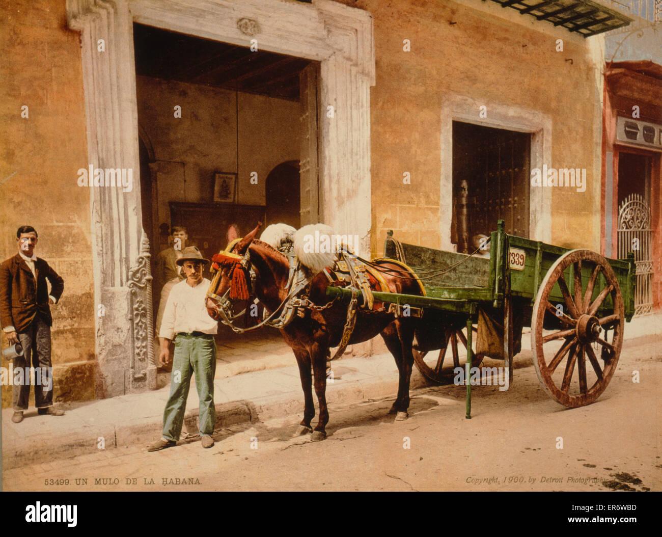 UN-Mulo De La Habana. Mann mit Wagen, gezogen von einem Maultier. 1900 bis heute. Stockbild