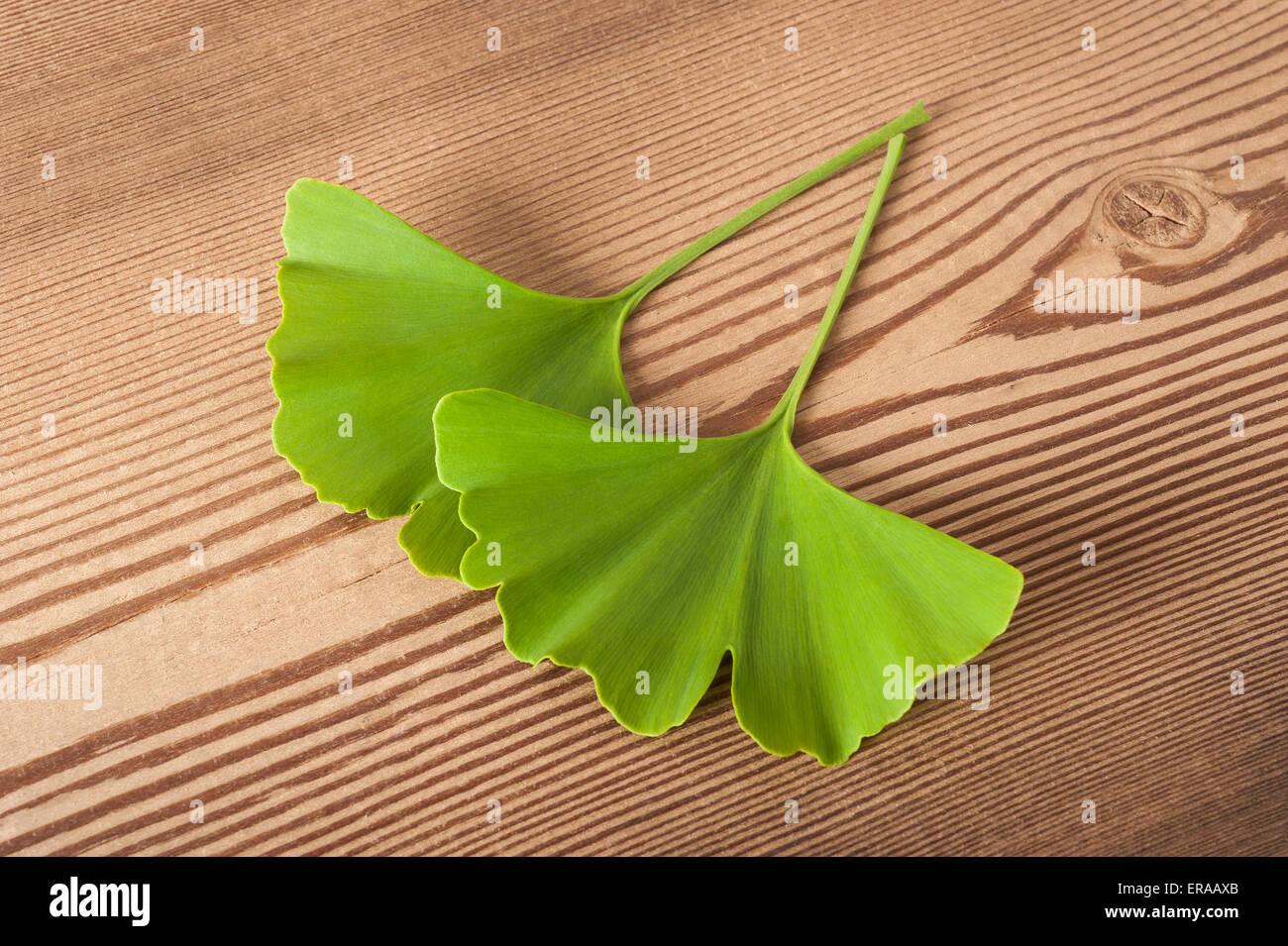 ginko biloba leaf green wood stockfotos ginko biloba leaf green wood bilder alamy. Black Bedroom Furniture Sets. Home Design Ideas