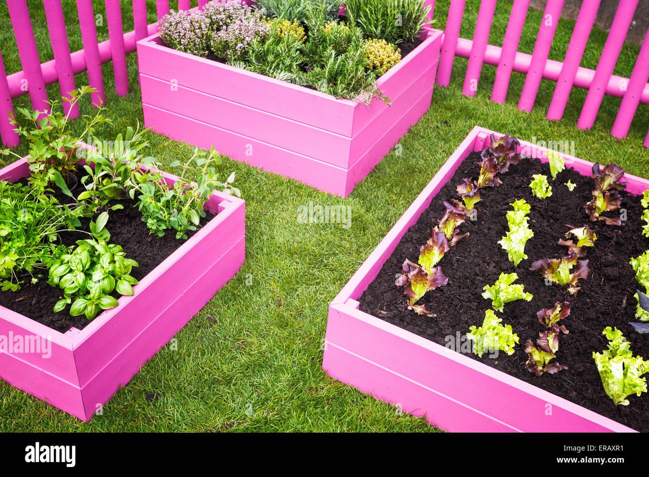 Stadtischen Krautergarten Rosa Hochbeeten Mit Krautern Und Gemuse