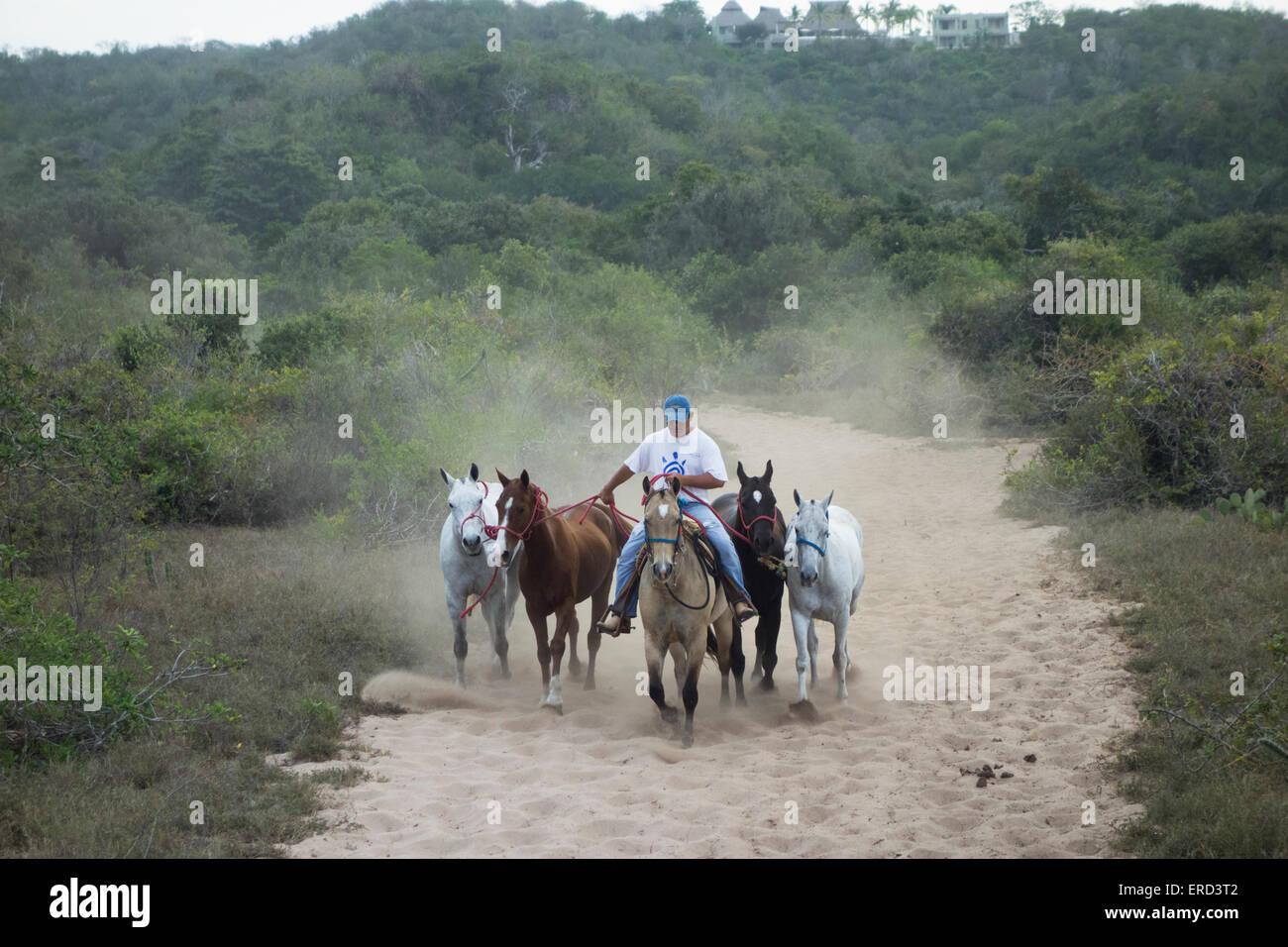Bräutigam Ausübung Polo-Ponys; Careyes; Costa Careyes, Jalisco, Mexiko Stockbild