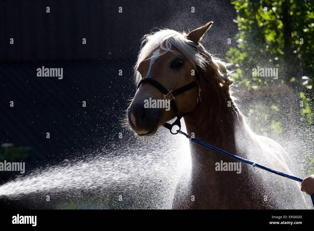Showering A Horse Stockfotos Showering A Horse Bilder Alamy