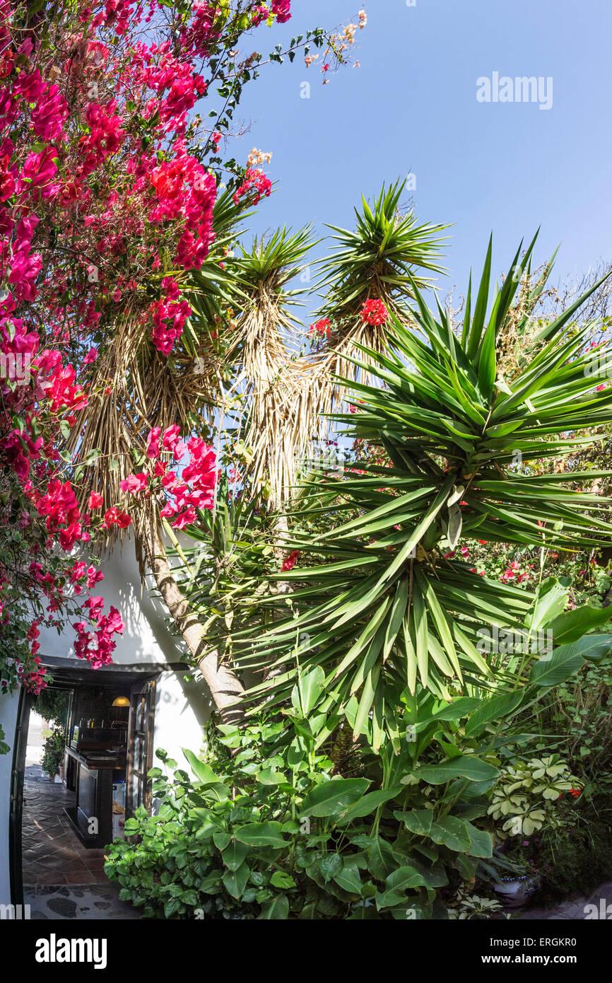 Casa Santa María, Terrasse, Blumen, Betancuria, Fuerteventura, Kanarische Inseln, Spanien Stockbild