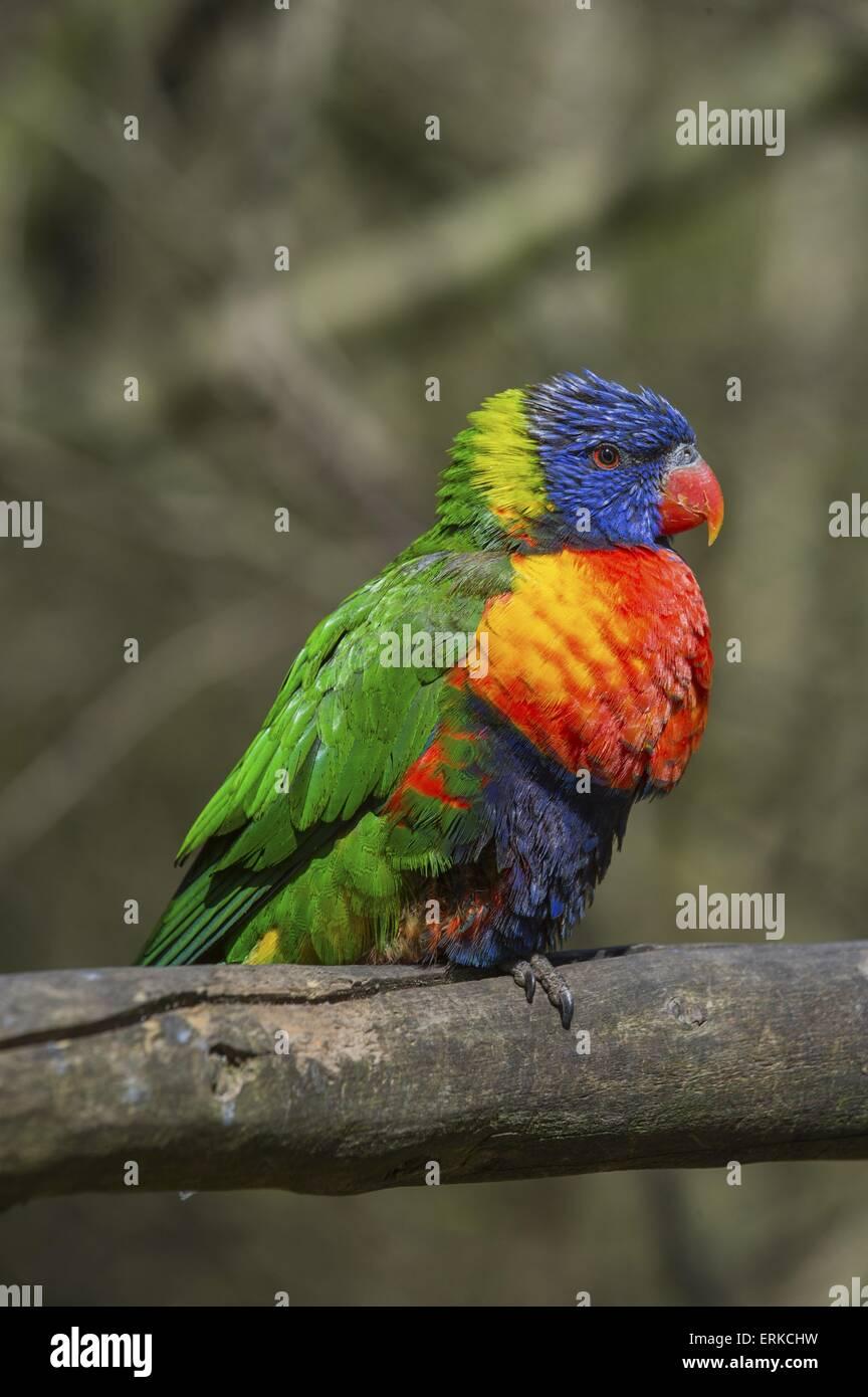 Vogelpark Marlow Stockbild