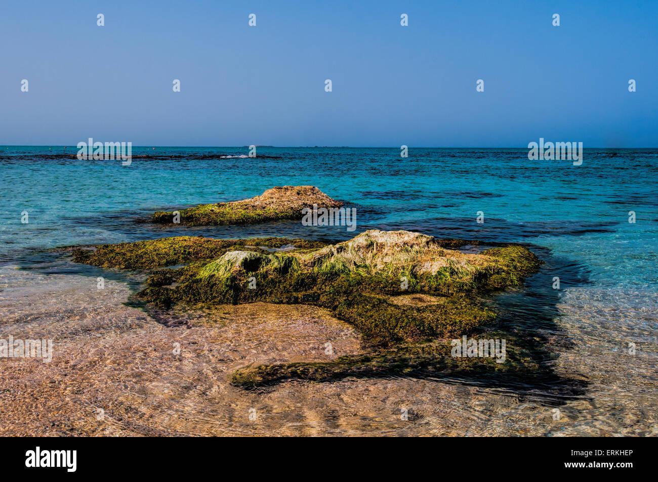 Kleine Insel in der Nähe der Küste voller Algen bei Flut Stockbild