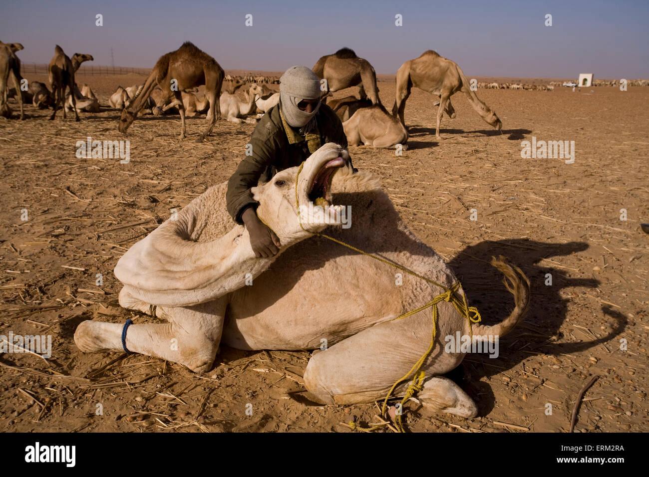 Die Haltestelle in Dongola, Sudan ist ein guter Zeitpunkt für Kamel ...