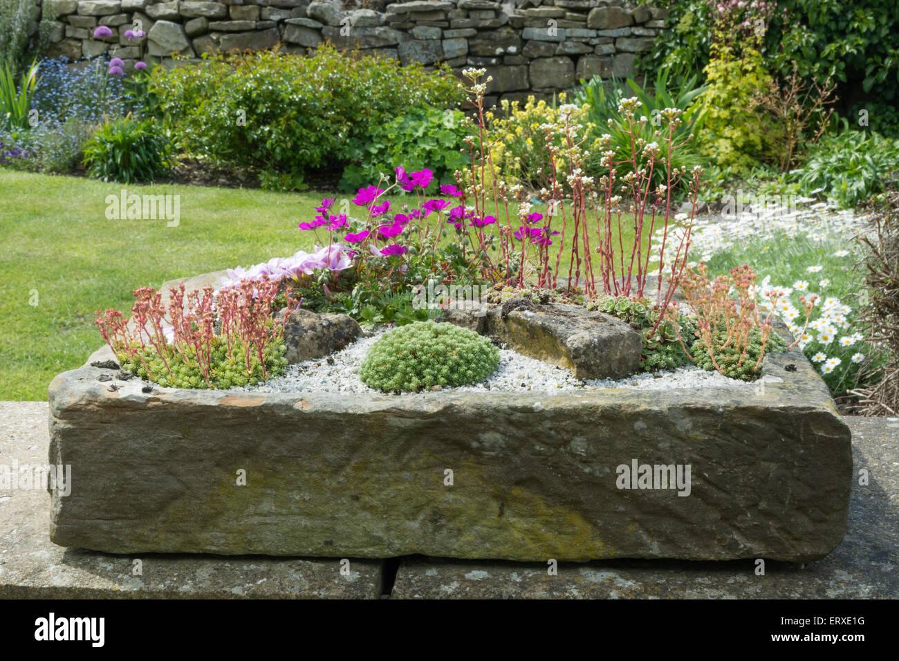 Alpines Gepflanzt In Einem Stein Garten Waschbecken Stockfoto Bild