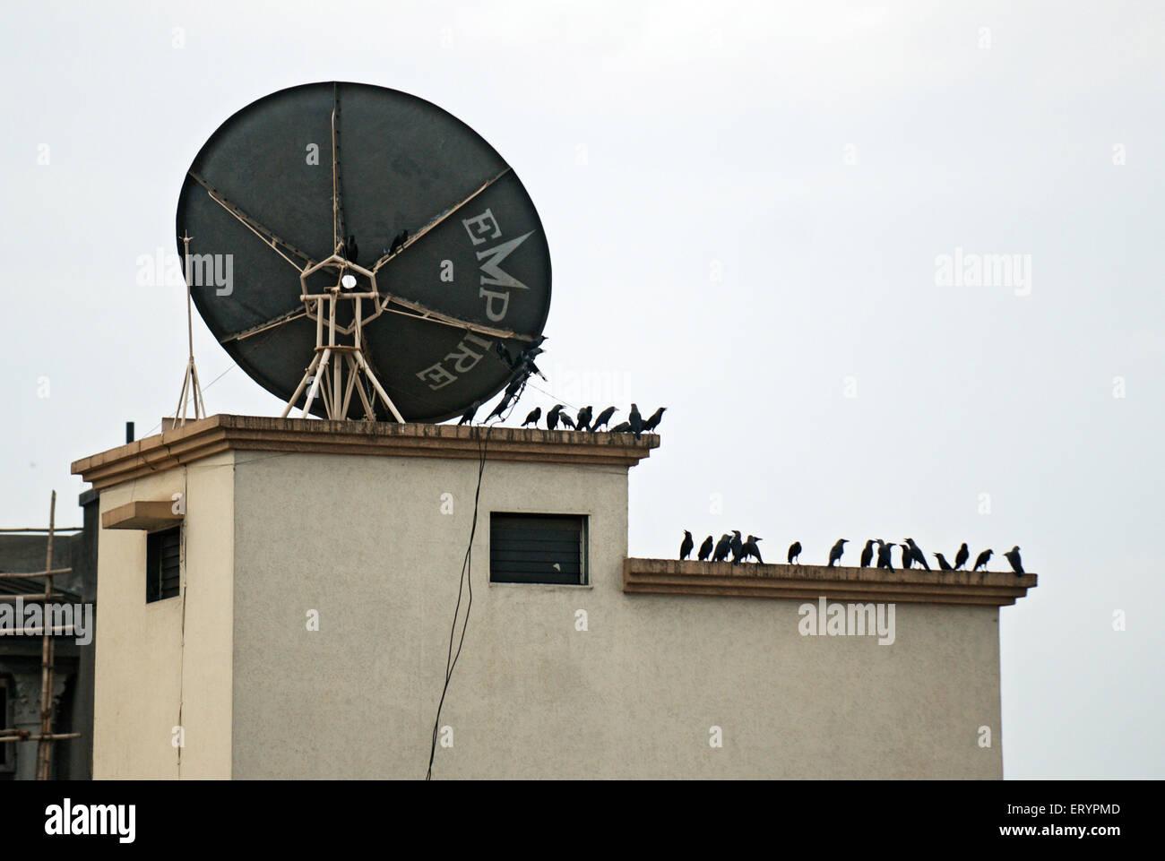 Krähen und Parabolantenne auf Terrasse des Nariman House nach Terroranschlag von Deccan Mudschaheddin; Bombay Stockbild