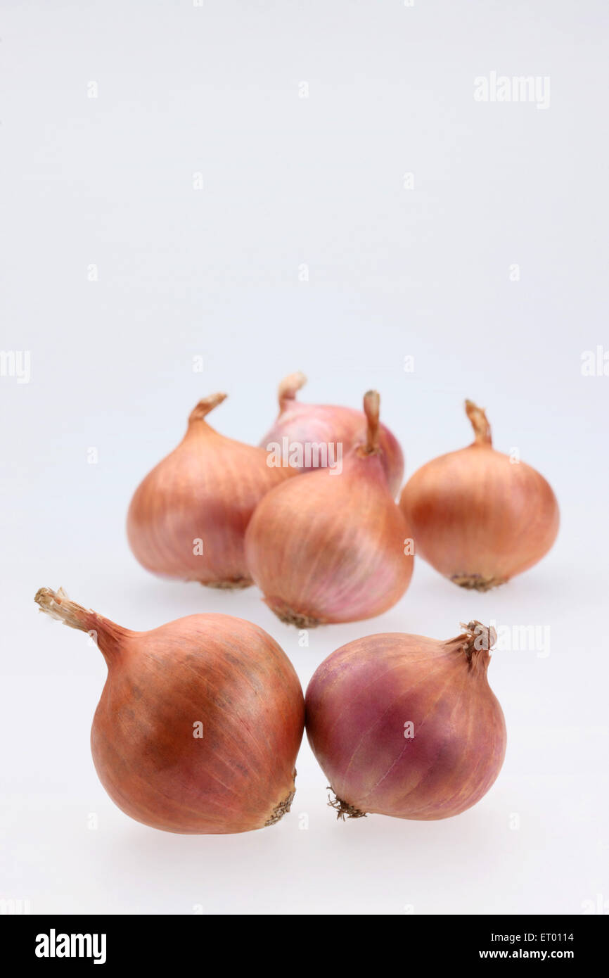 Zwiebeln lateinischen Allium Cepa als ein Gemüse und Salat; Indien Stockbild
