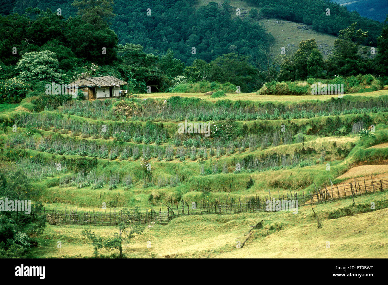 Porthi Mund Landschaft im Nilgiris; Ooty; Ootacamund; Udhagamandalam; Tamil Nadu; Indien Stockbild