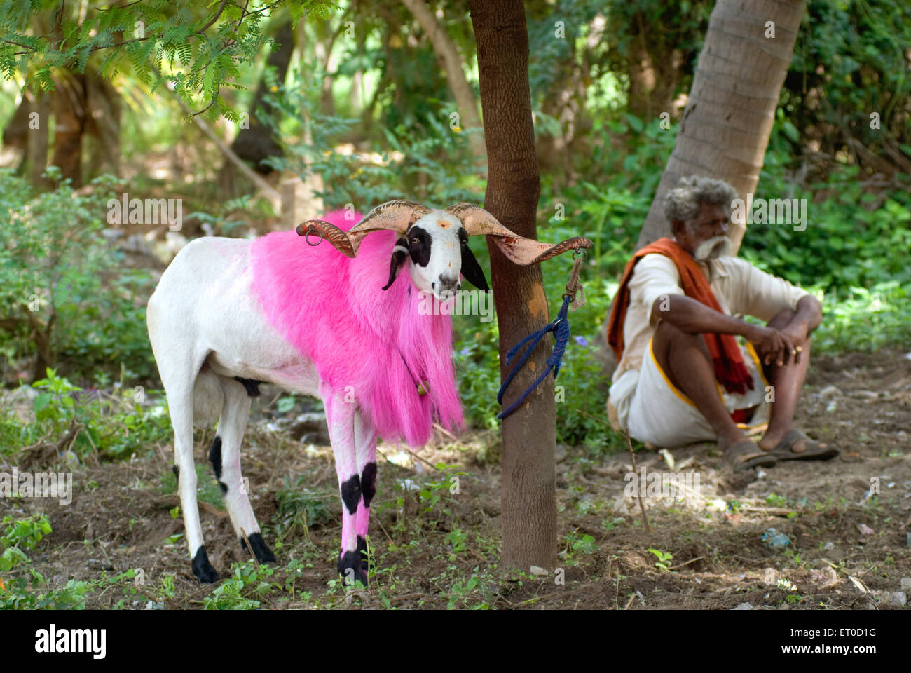 Fighting Old Age Stockfotos & Fighting Old Age Bilder - Alamy