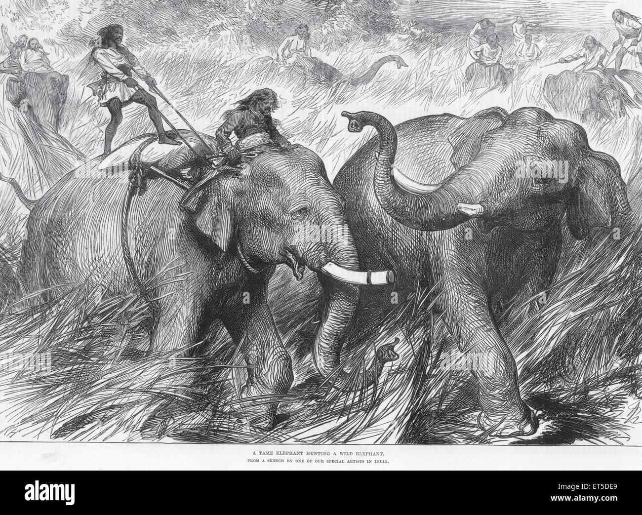 Lizenzgebühren auf Tour zahmen Elefanten jagen wilde Elefanten; Indien Stockbild