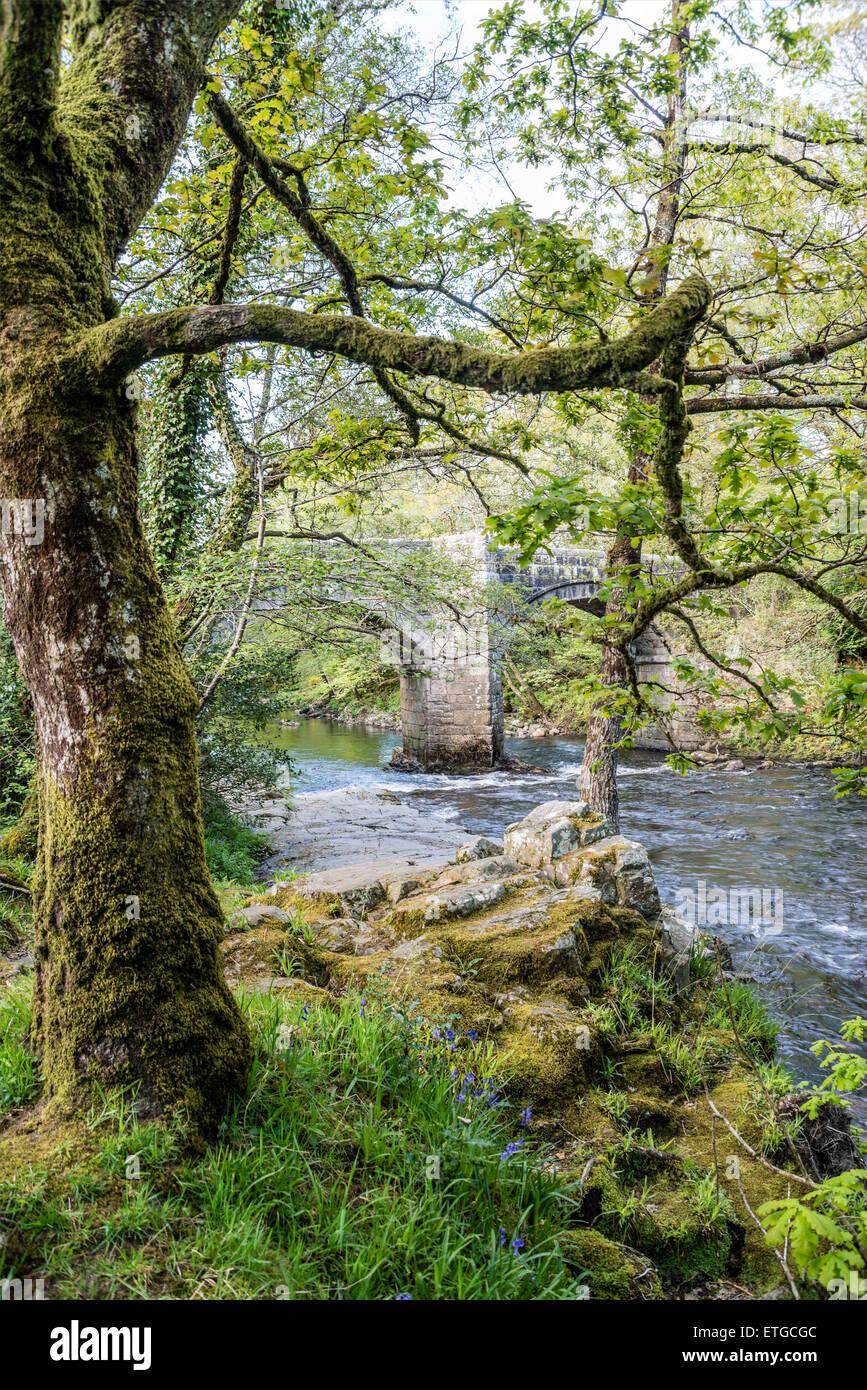 Steinbrücke im Dartmoor National Park in der Nähe von Dachse Holt, Devon, England, UK Stockbild