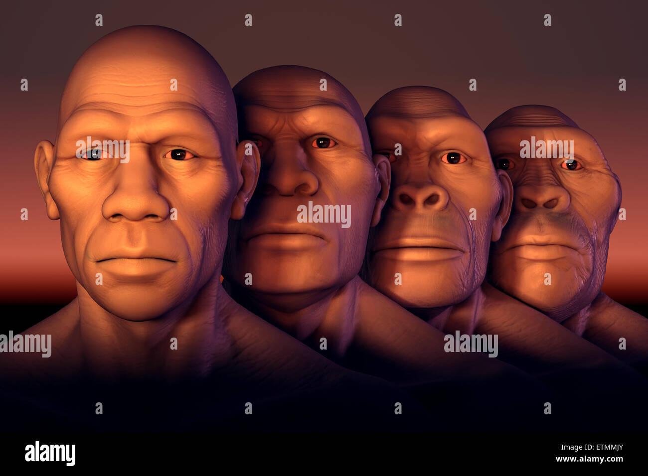 Konzeptionelle Darstellung vier Stufen der menschlichen Evolution ...