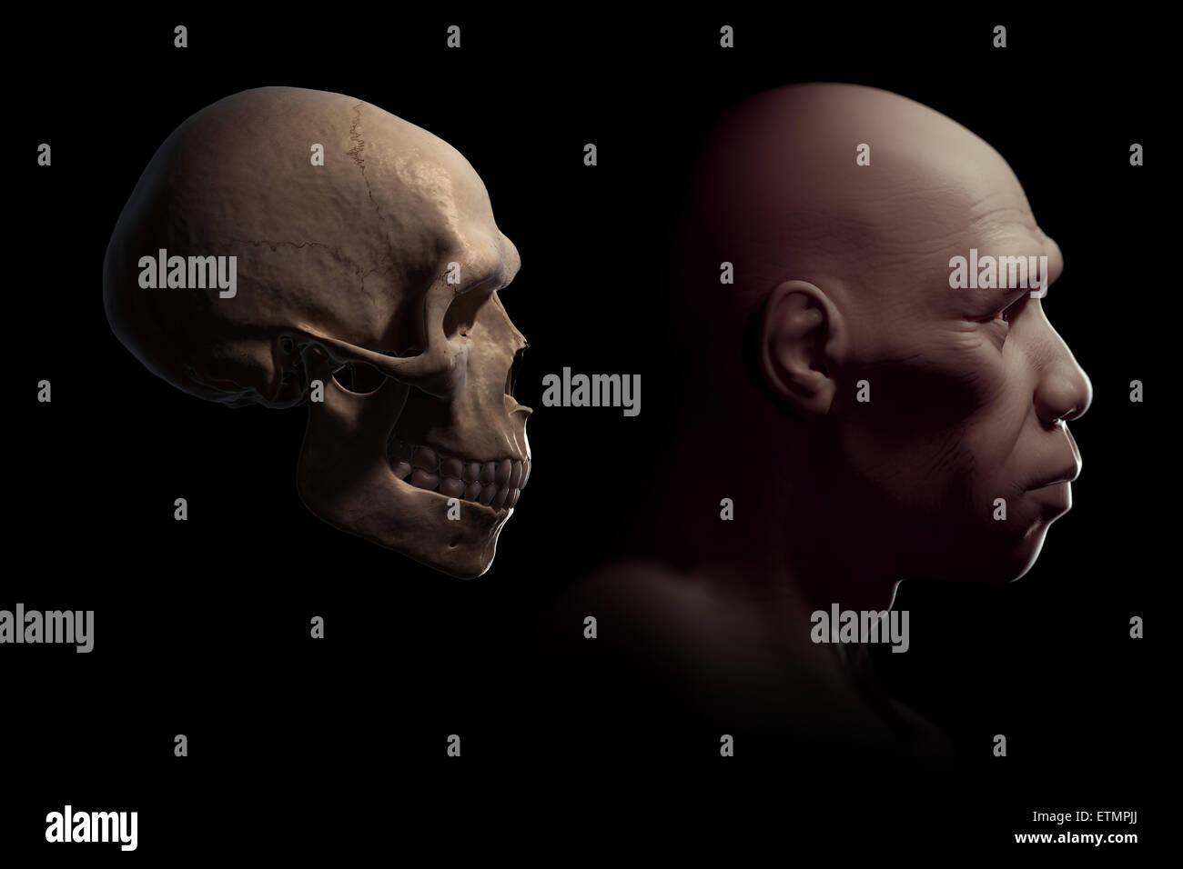 Darstellung eines Homo Sapiens oder moderne Menschen neben einem ...
