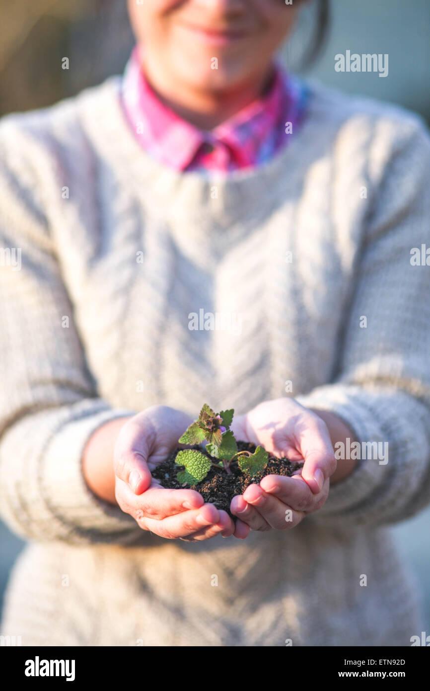 Frau mit Keimling in der Handfläche von ihrer Hand Stockbild