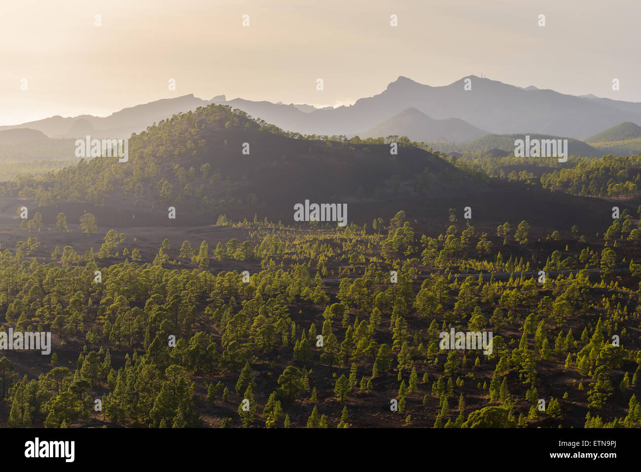 Baum bedeckt Vulkanlandschaft, Santiago del Teide, Kanarische Inseln, Spanien Stockbild