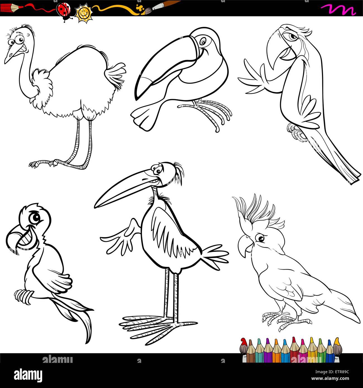 Malvorlagen Cartoon Buchillustration des lustige Vögel Figuren Set ...