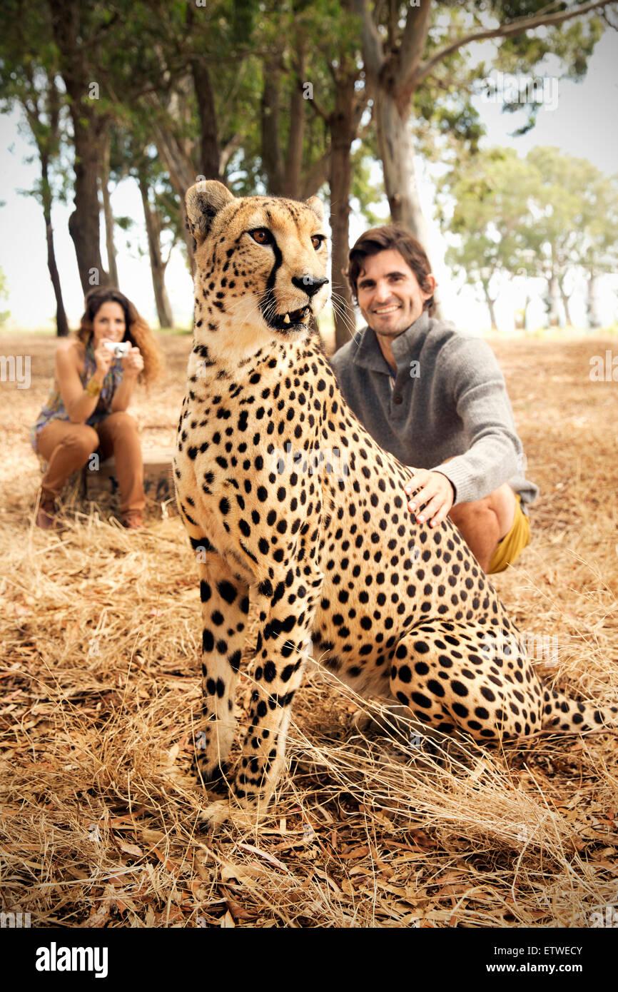 Südafrika, Mann streicheln zahme Geparden auf Wiese mit Frau im Hintergrund Stockbild