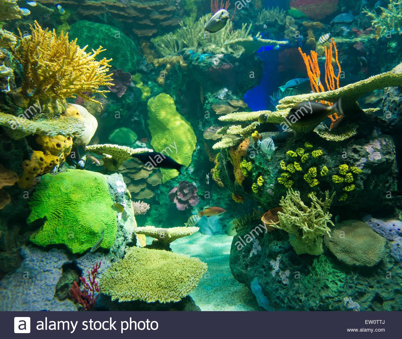 korallenriffe sind unterwasser strukturen hergestellt aus
