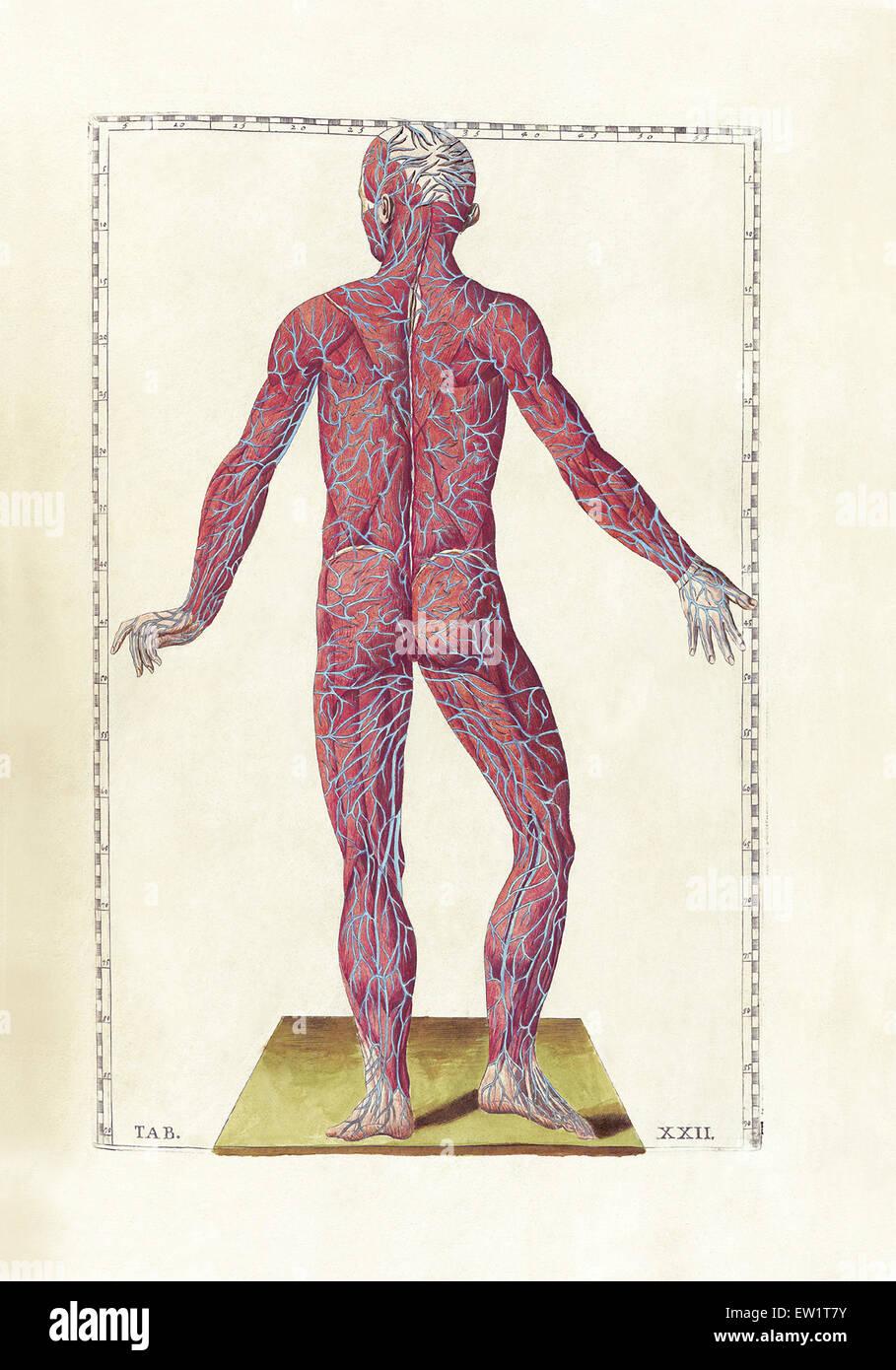 Ziemlich Anatomie Und Physiologie Marieb 9. Auflage Fotos ...