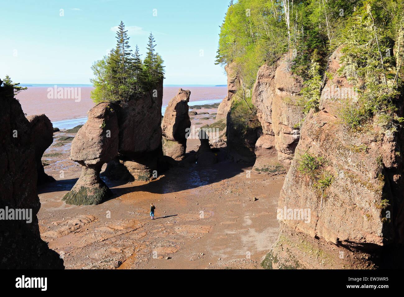 Bay Of Fundy, New Brunswick, Kanada Hopewell Rocks Strand bei Ebbe mit Touristen Strand zu Fuß. Stockbild