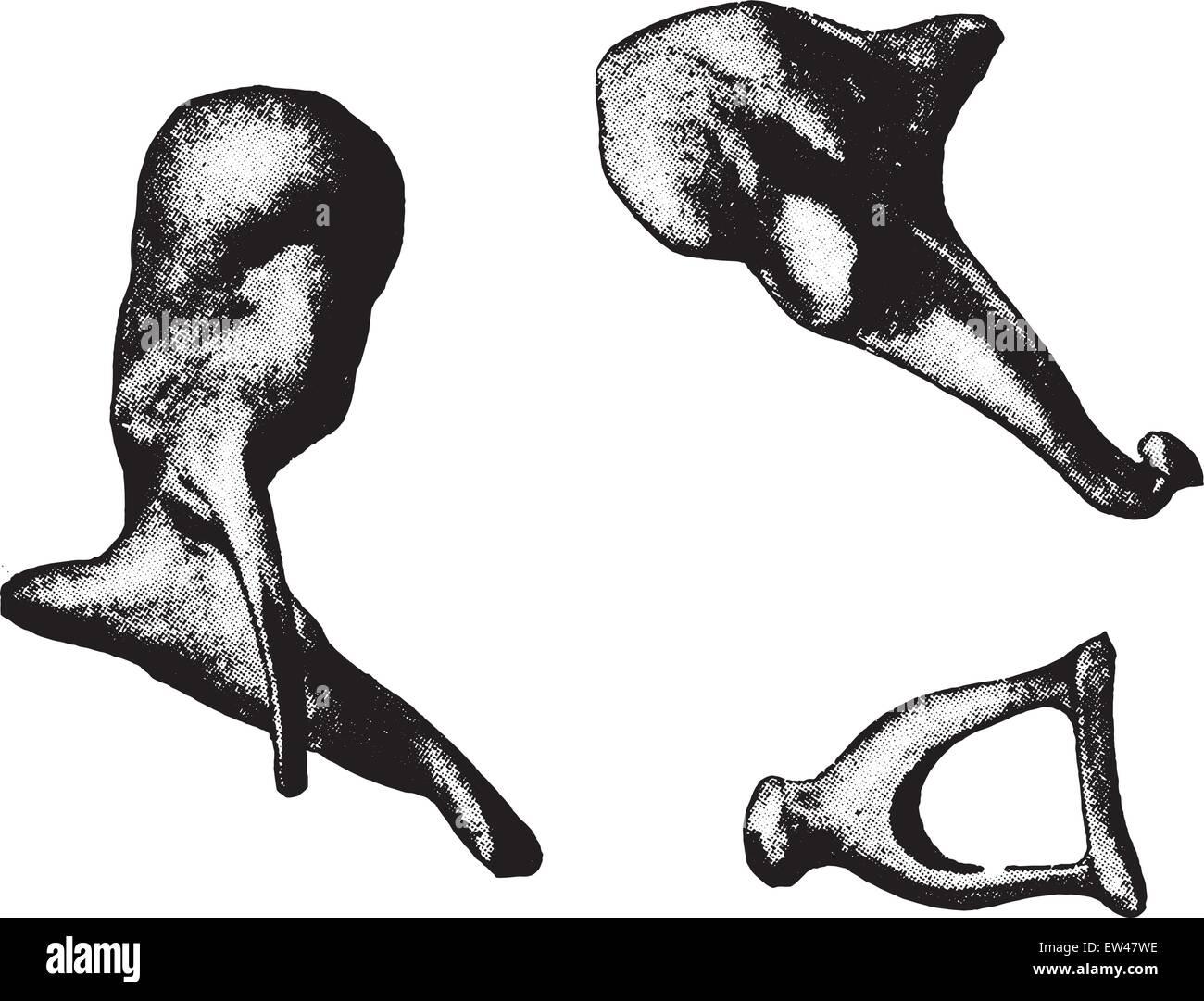 Knochen der Ohr-Hammer, Amboss, Steigbügel, graviert Vintage ...