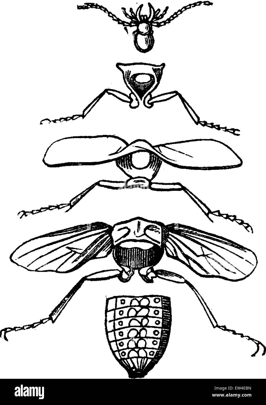 Körperteile eines Insekts, graviert Vintage Illustration. La Vie Dans la Nature, 1890. Stockbild