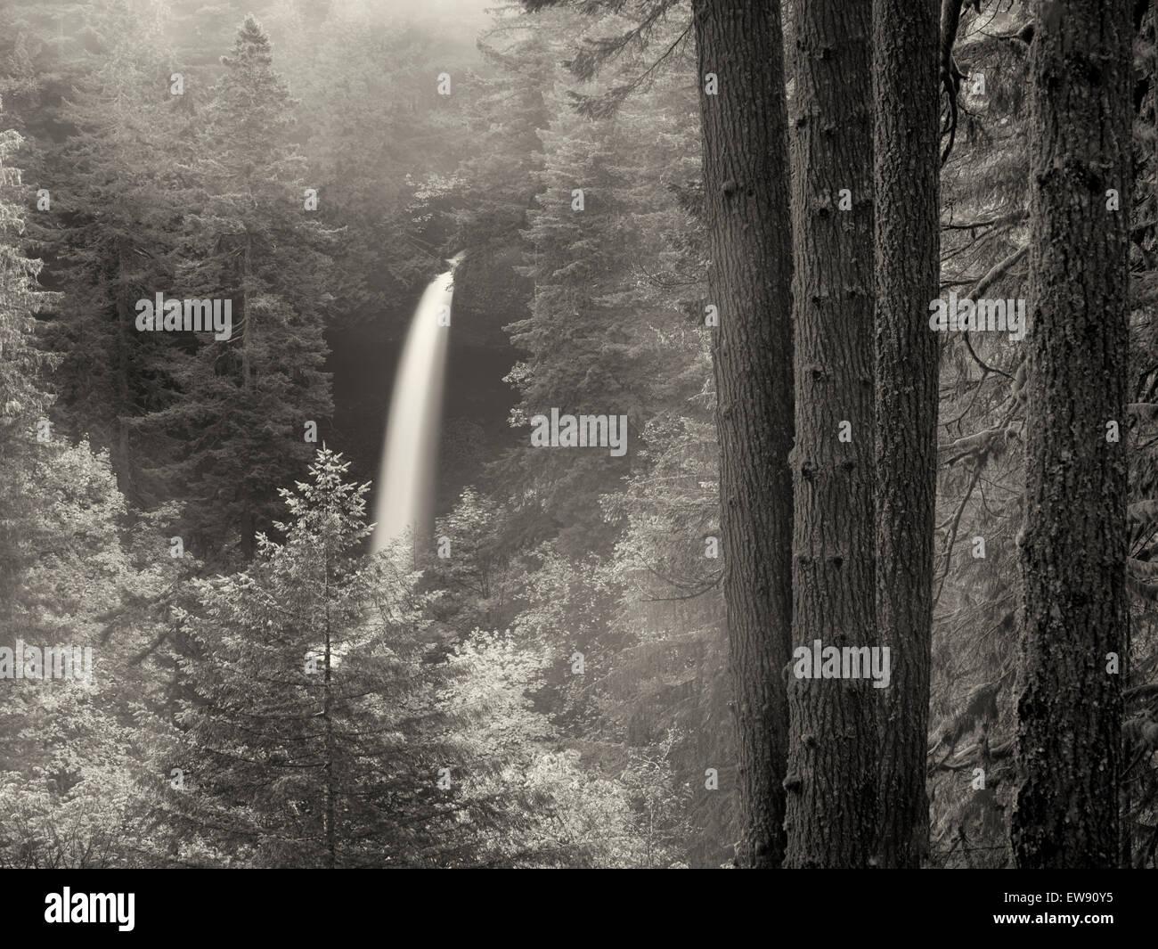 Norden fällt mit Nebel und Herbst Farbe. Silver Falls State Park, Oregon Stockbild
