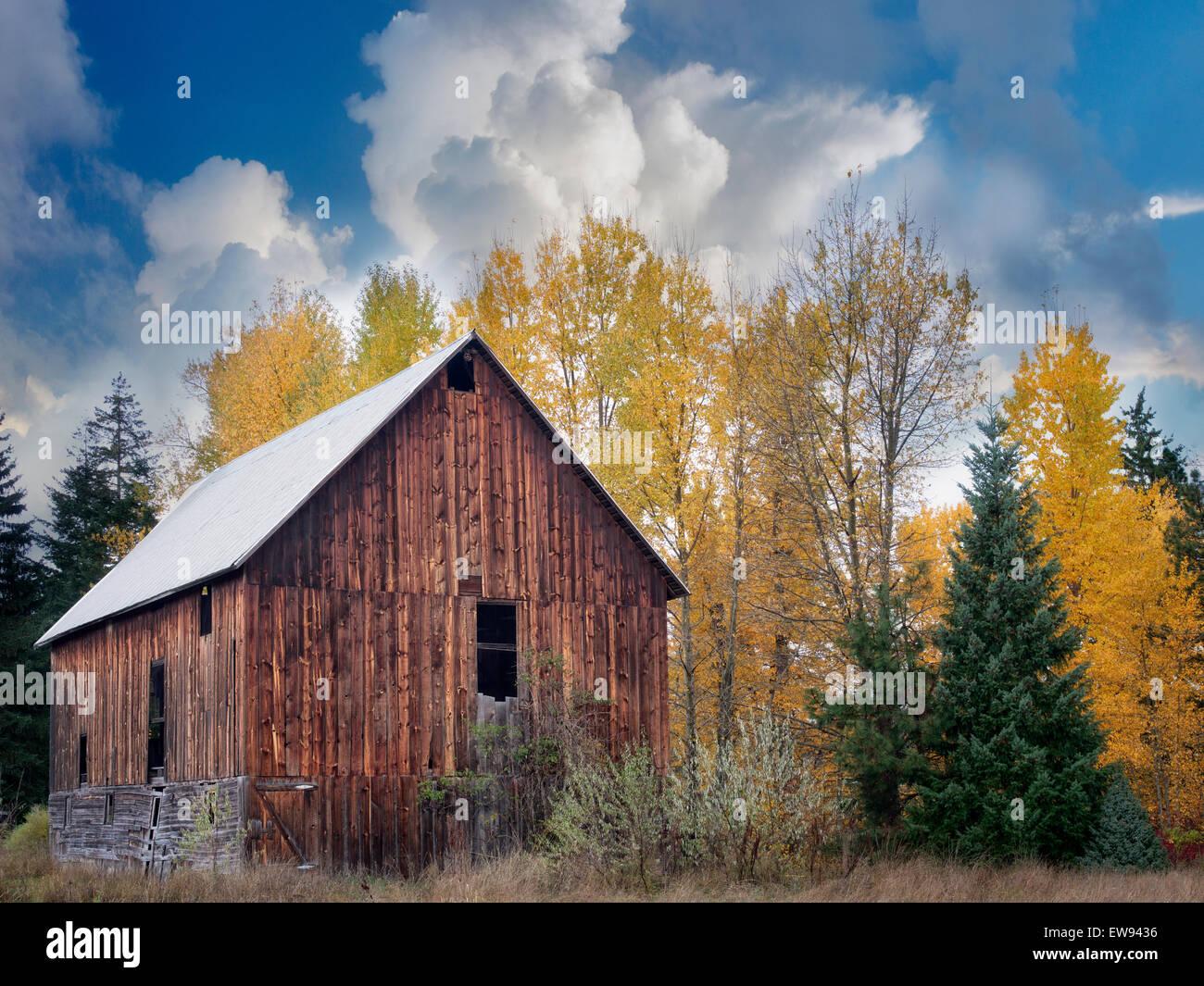 Scheune mit Herbstfarben. In der Nähe von Trout Lake, Washington Stockbild