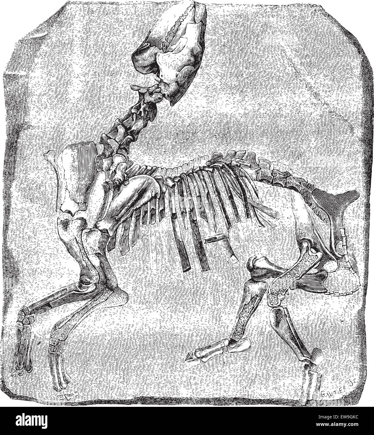 Comparative Anatomy Stockfotos & Comparative Anatomy Bilder - Alamy