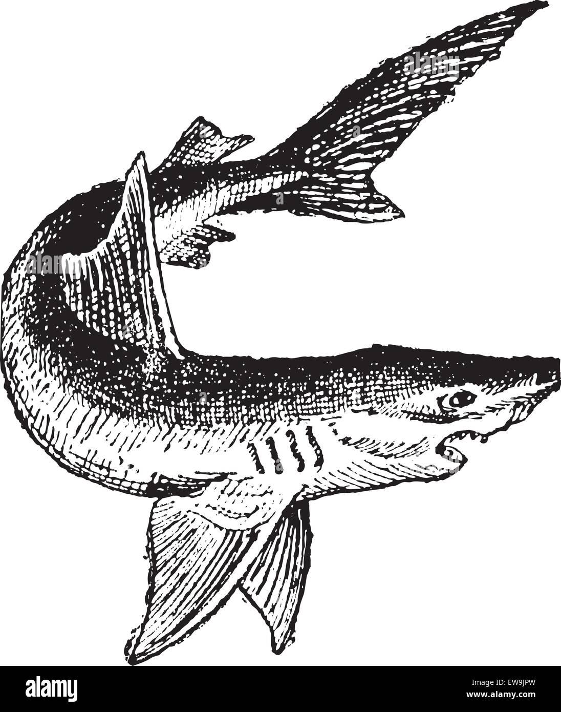 Fish Skeleton White Stockfotos & Fish Skeleton White Bilder - Seite ...