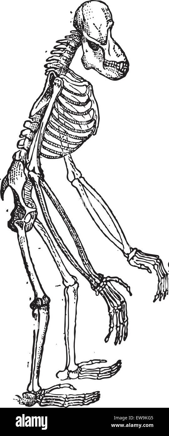 Ziemlich Menschliche Körperteile Rückseite Bilder - Anatomie Ideen ...