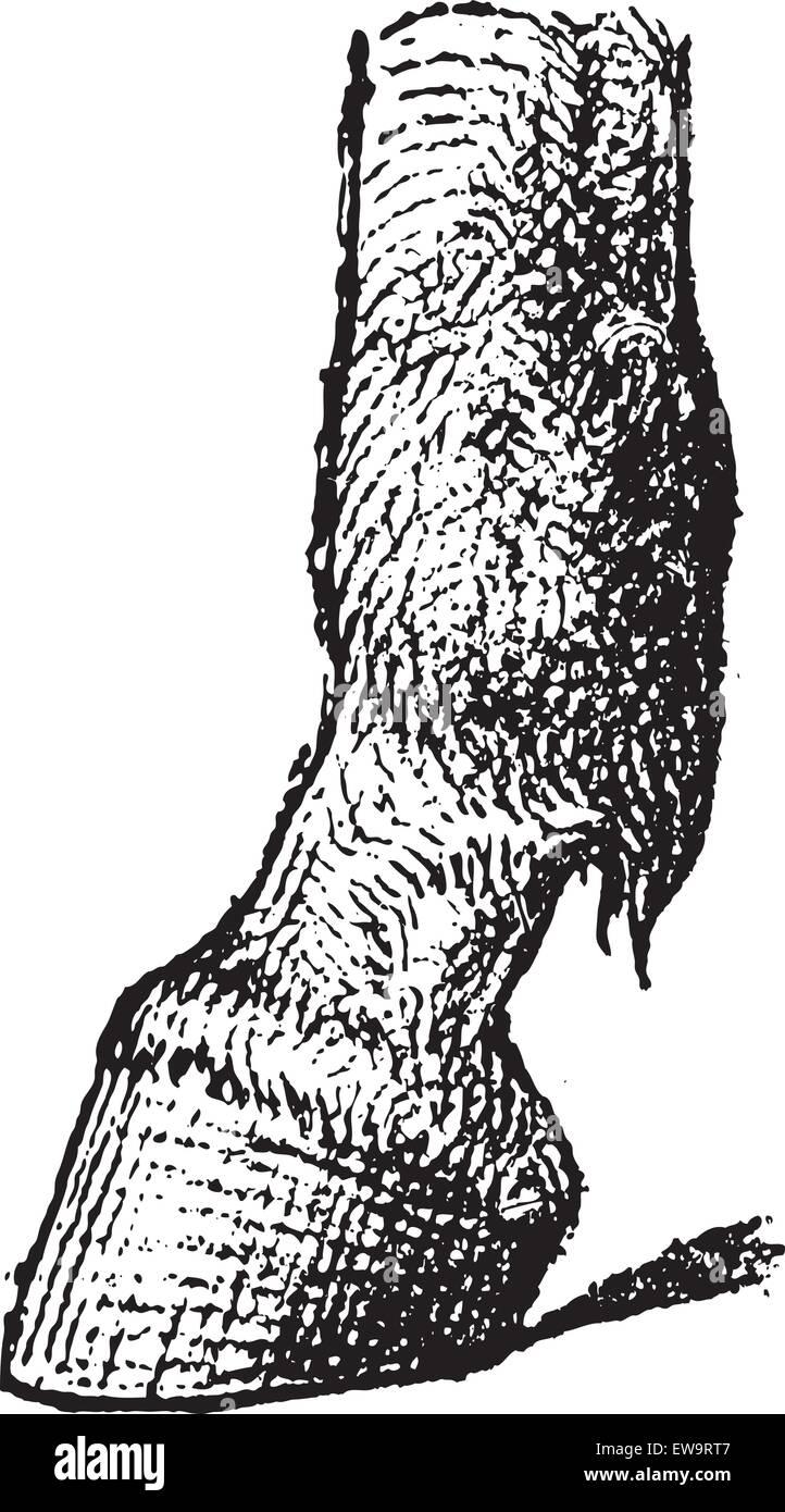 Fessel eines Pferdes, graviert Vintage Illustration. Wörterbuch der Worte und Dinge - Larive und Fleury - 1895 Stockbild