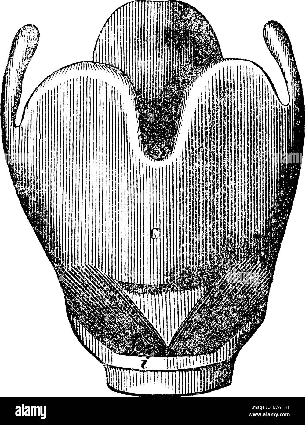 Larynx Phonation Stockfotos & Larynx Phonation Bilder - Alamy