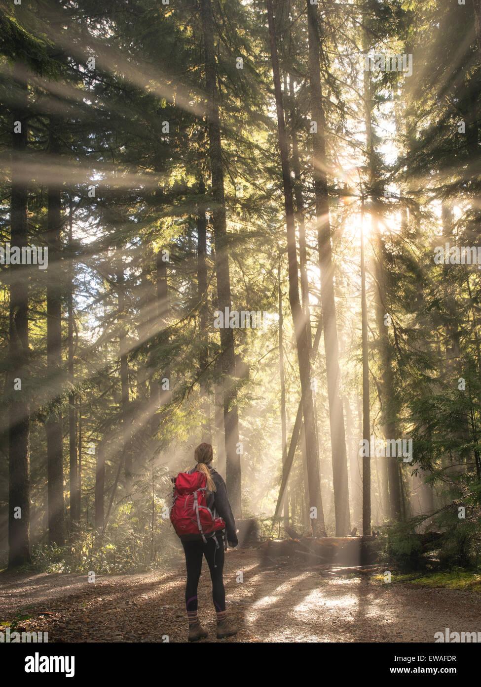 Straße/weg und Wanderer entlang Opal Creek mit Sunburst/Godrays. Opal Creek Wilderness, Oregon Stockbild
