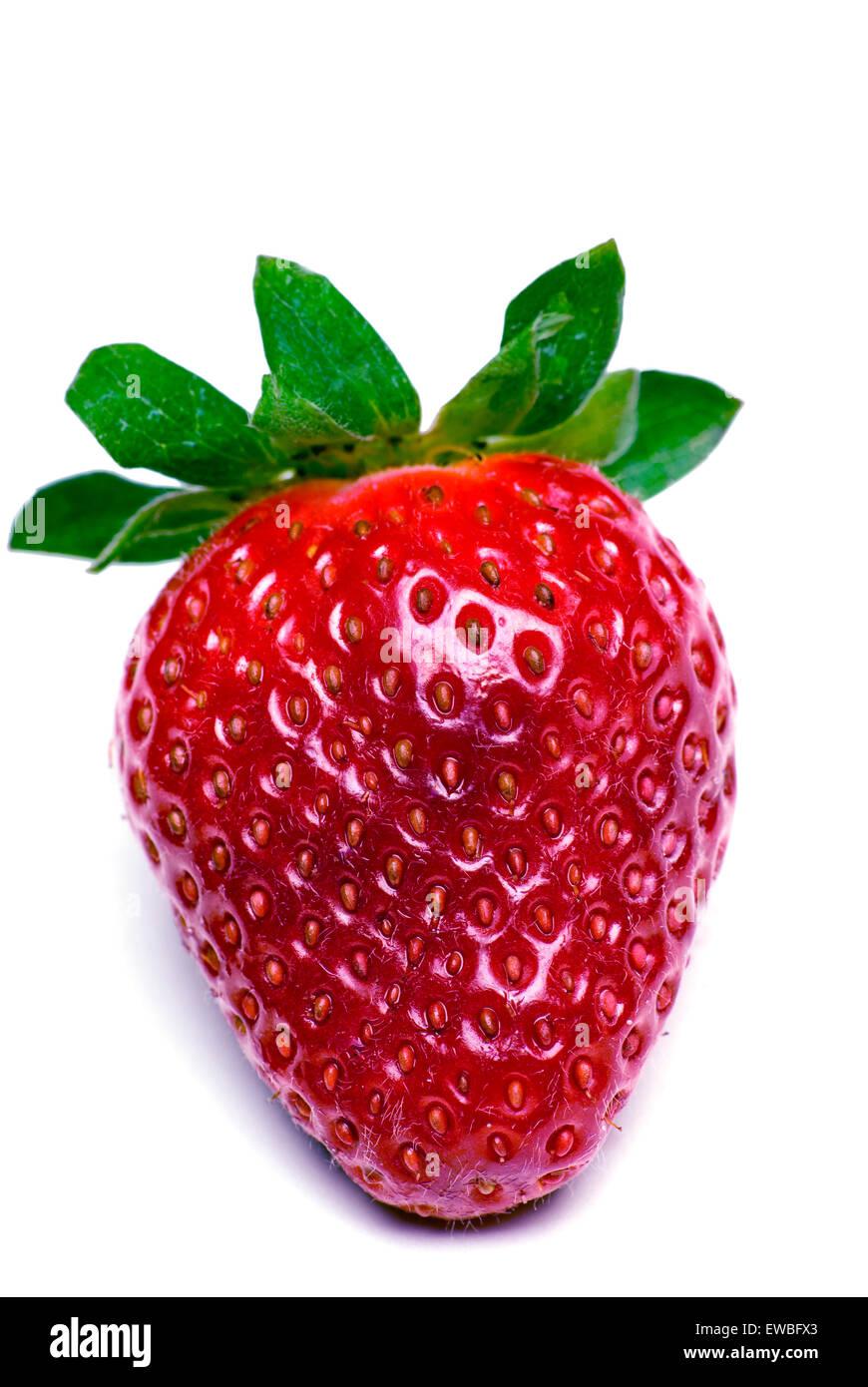 Das perfekte Erdbeere Makro erschossen auf weißem Hintergrund. Stockbild