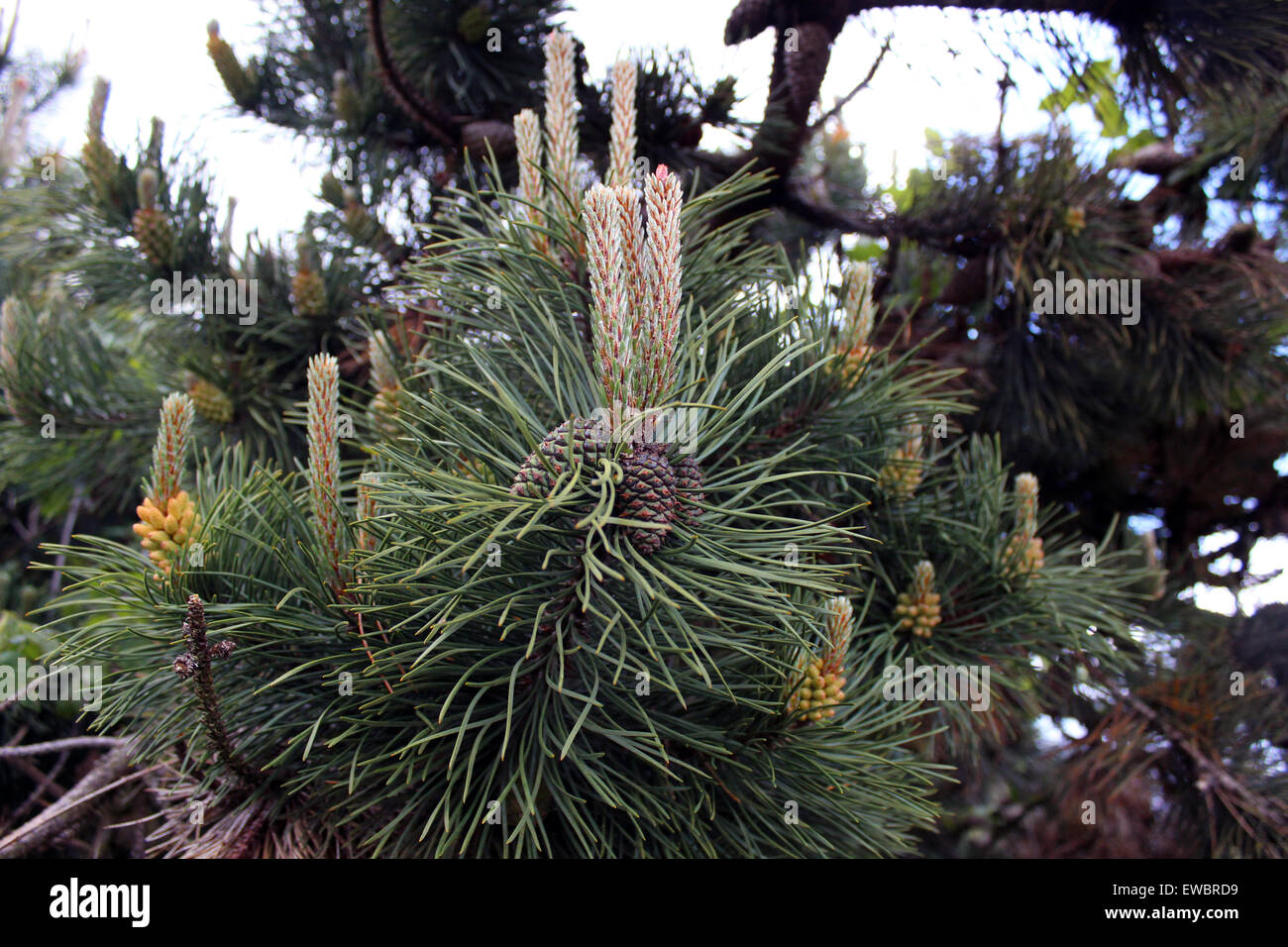 Baum, Baum, Winkel, Balken, schön, Schönheit, Buche, Ruhe, Gelassenheit, England, Englisch, ätherisch, Stockbild