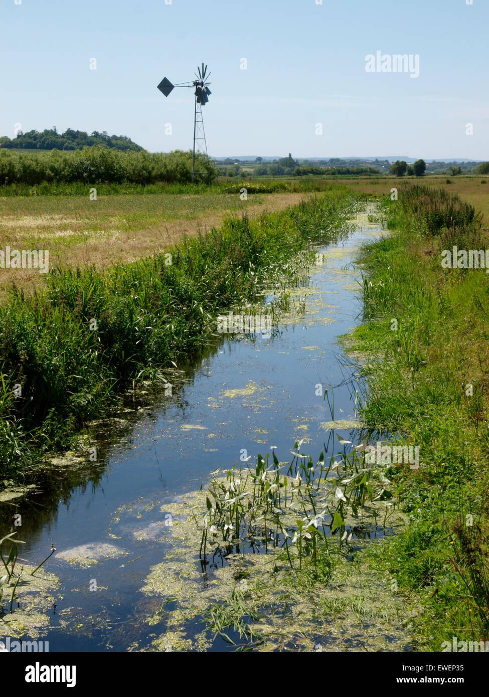 Deich und Wind angetriebene Wasserpumpe auf den Somerset Levels, UK Stockbild