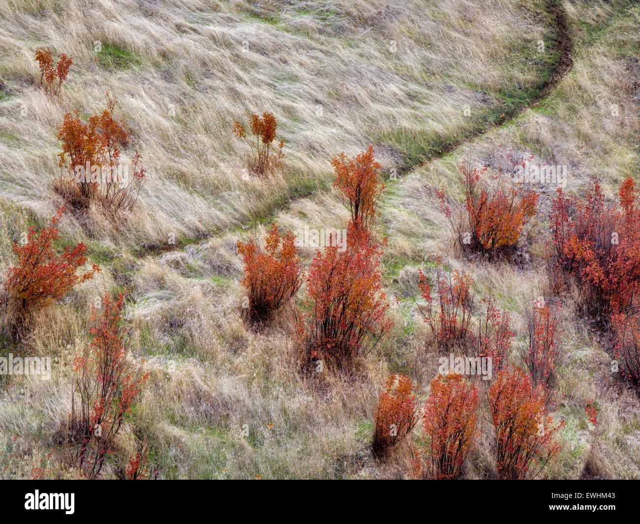 Wanderweg mit Herbstfarben. Columbia River Gorge National Scenic Bereich, Washington Stockbild