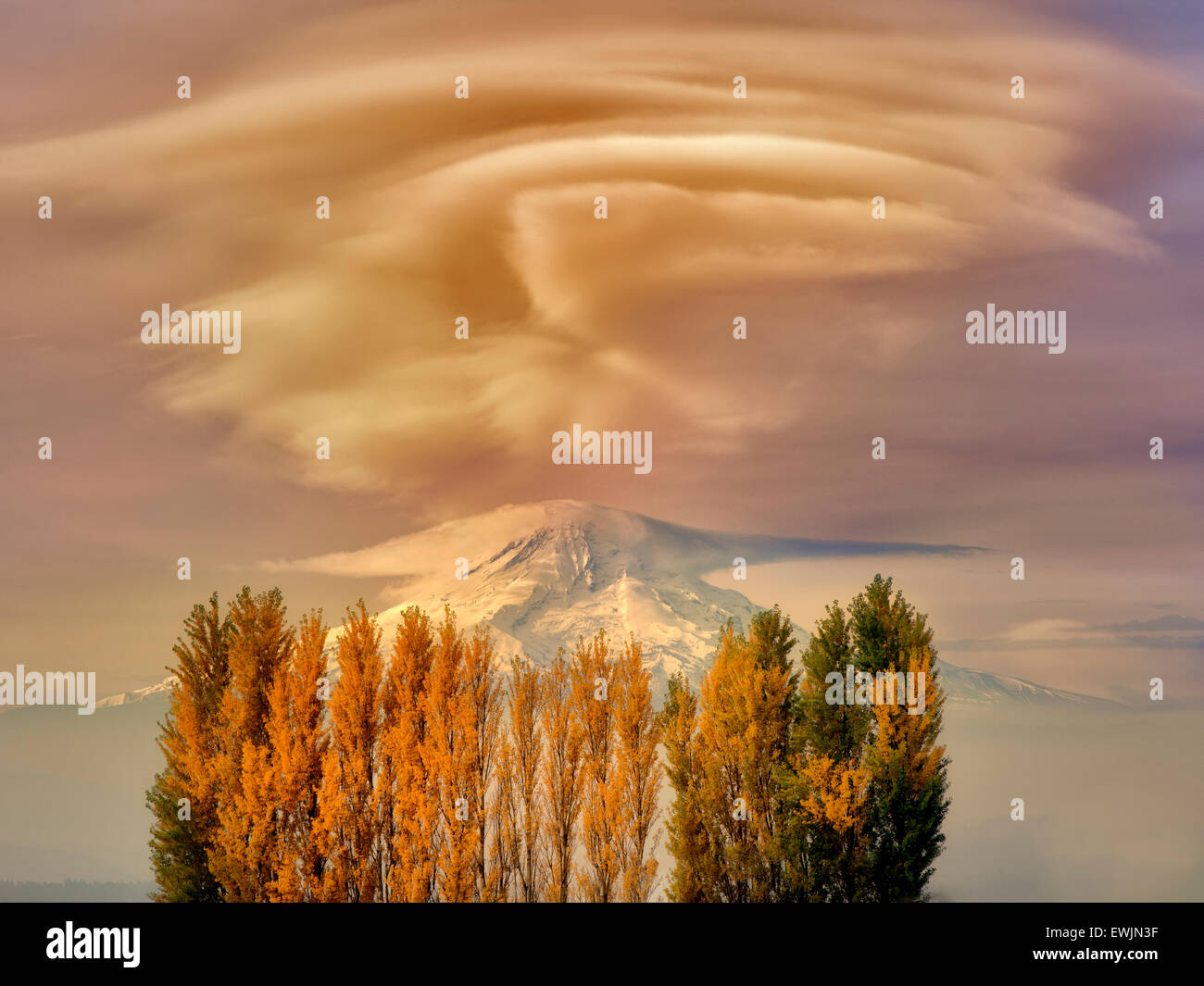 Mt. Hood und Herbst farbige Pappeln. Columbia River Gorge Natioanl Scenic Area, Washington Stockbild