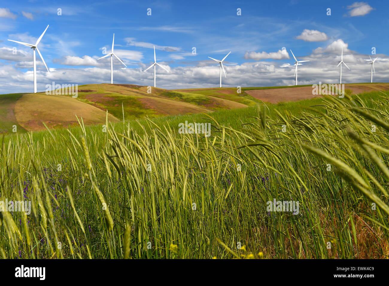Windturbinen Sie Bauernhof-auf Hügel Kontrast grünen Rasen und blauer Himmel, US-Bundesstaat Washington, Stockbild