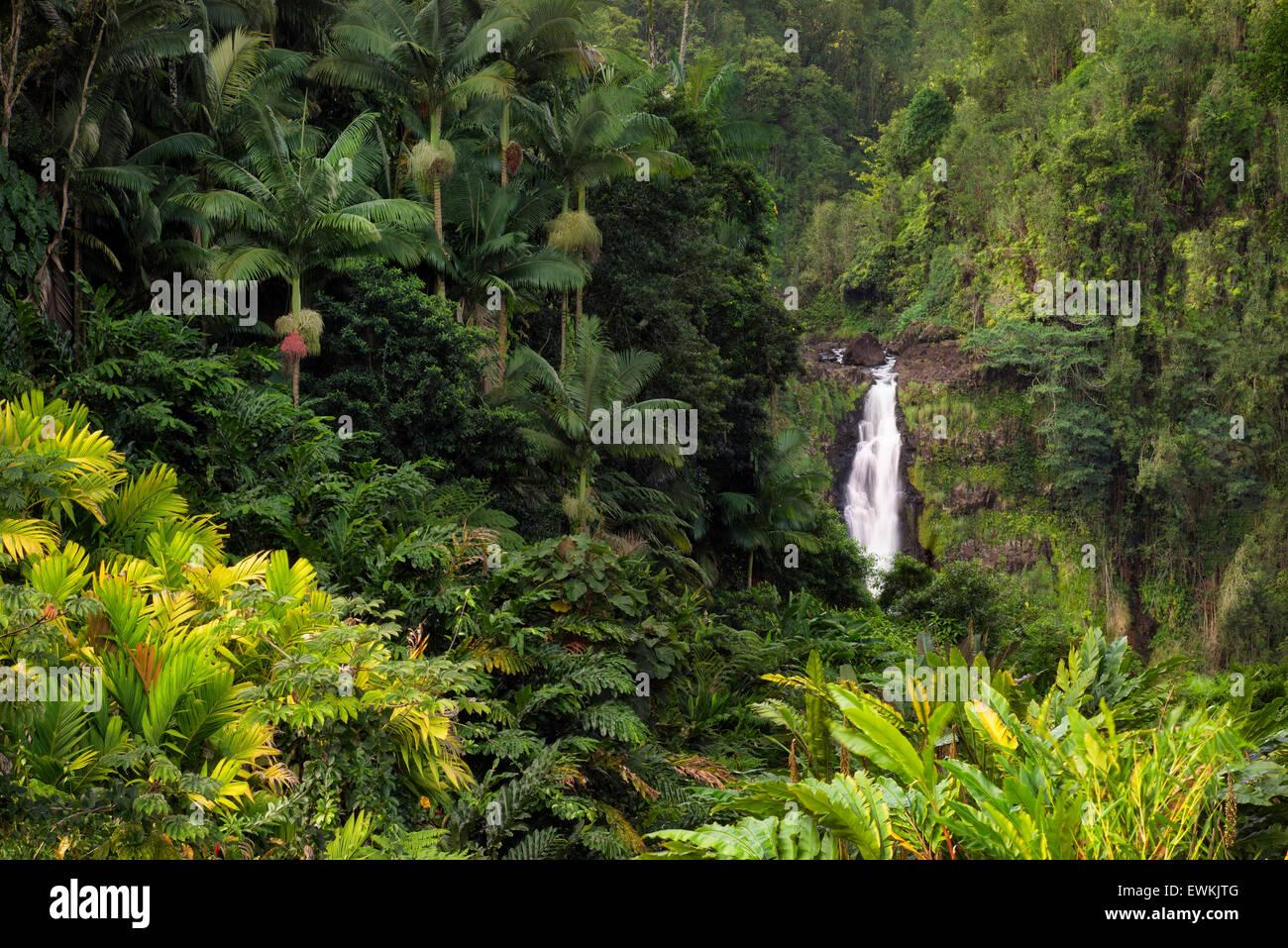 Akaka Wasserfälle. Akaka Falls State Park. Hawaii, Big Island Stockbild